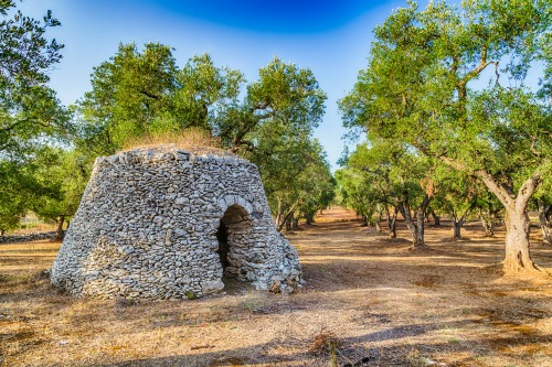 Olive Grove -Gallipoli, Salento, Puglia